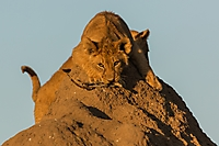 Spielstunde- Botswana