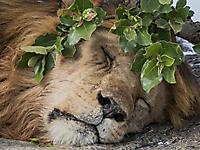 The sleeping King_1