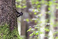 Eichhörnchen_2