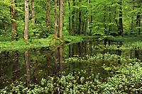 Huckinger See im Frühjahr_1