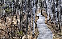 Ibmner Moor im Frühjahr_1