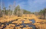 Ibmner Moor im Frühjahr_2