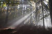 Sonnenstrahlen im nebeligen Wald