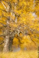 Autumn colours near the Rowan Tree