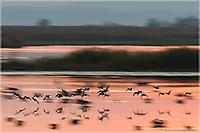 Einflug der Enten
