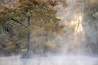 Morgenstimmung im Sumpf
