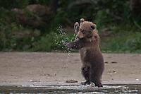 Kung Fu Braunbär