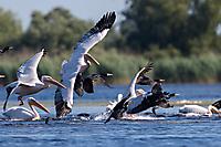 Rush hour im Donaudelta